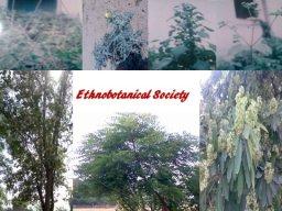 The Ethnobotanical Society