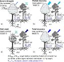 CONTRASTING ECOPHYSIOLOGICAL STRATEGIES RELATED TO DROUGHT: THE CASE OF A MIXED STAND OF SCOTS PINE (PINUS SYLVESTRIS) AND A SUBMEDITERRANEAN OAK (QUERCUS SUBPYRENAICA)