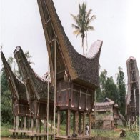Custom House Batak Tribe Indonesian