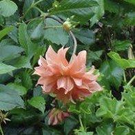 albany-floral.jpg