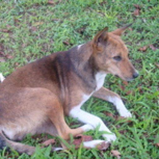alertdog