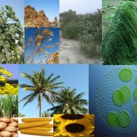 Biomass for biofuel