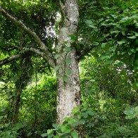 Forest-tree-VN.jpg
