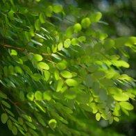 Hainan_greenair.jpg