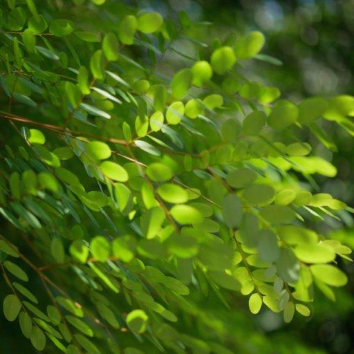 Hainan_greenair