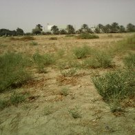 Al Ain. empty lot with irrigated trees in background