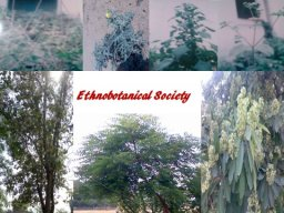 The Ethnobotanical Society