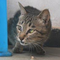 Mengla_county_cat2.jpg