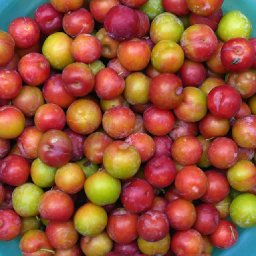 Chinese plums.jpg